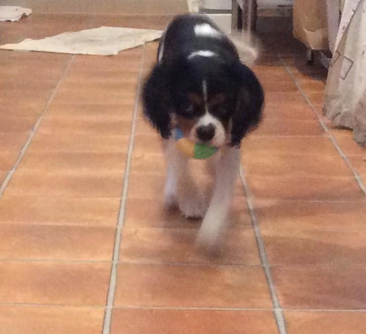 キャバちゃんとボール