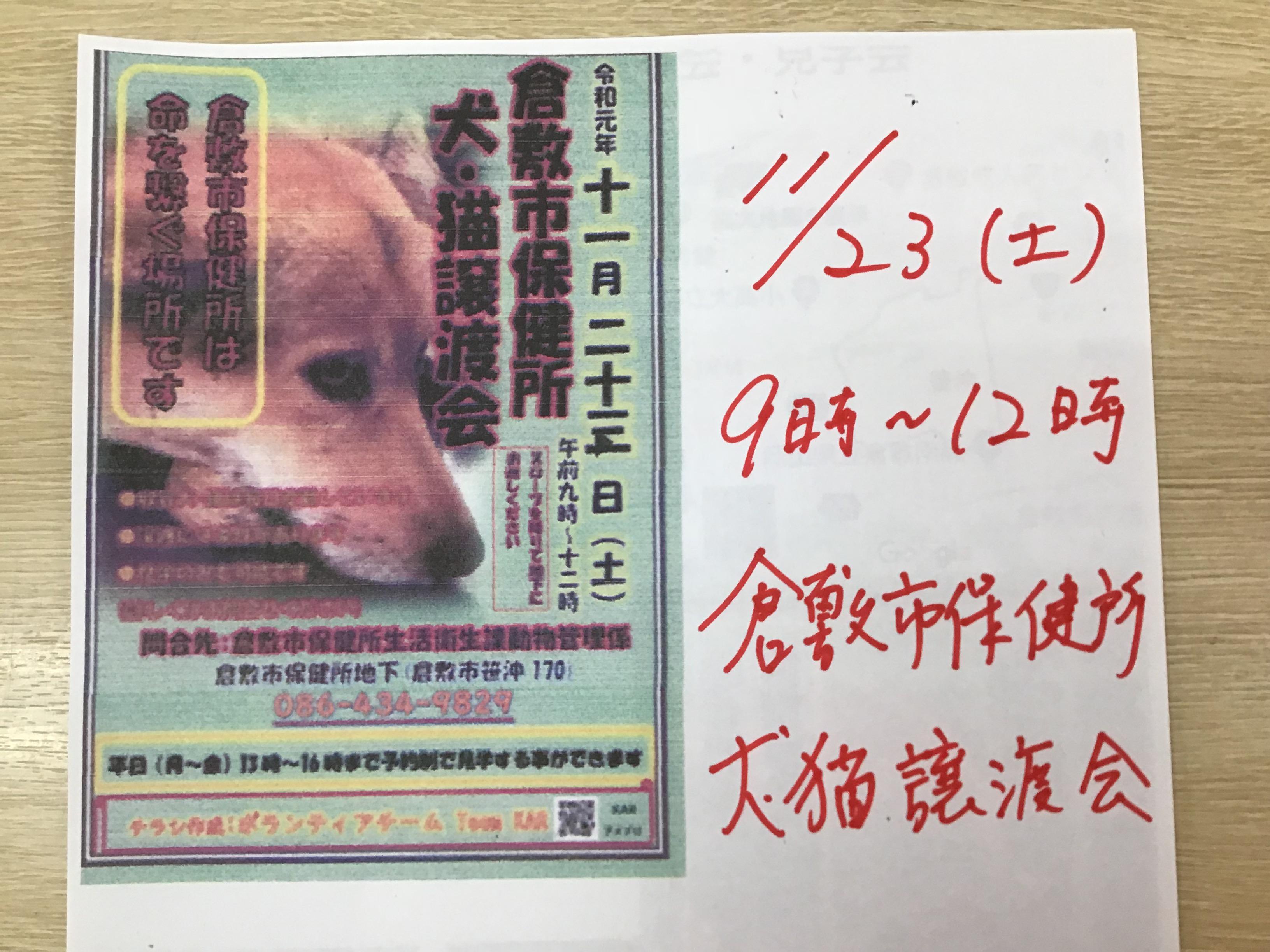 倉敷市保健所で犬・猫譲渡会