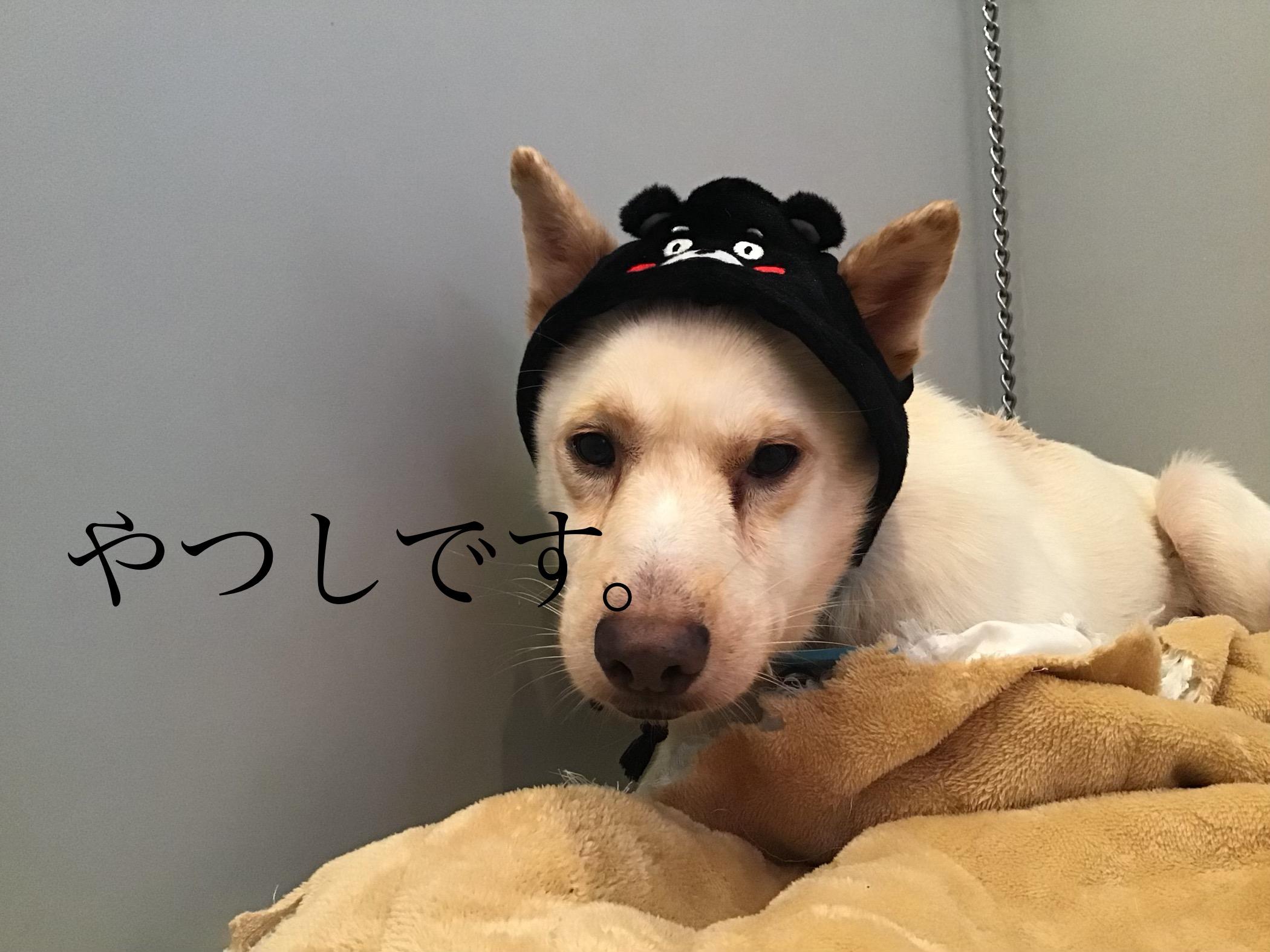 仮名 やつし 30日目
