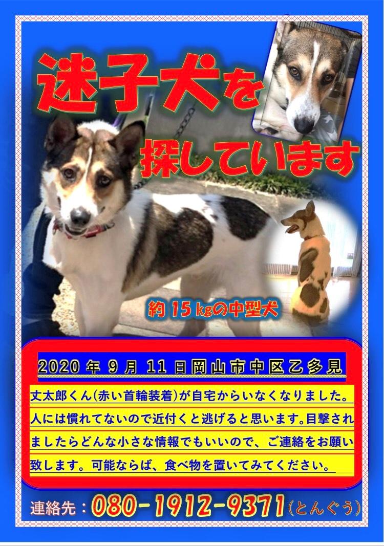 迷子犬・丈太郎の最新情報